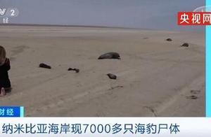 纳米比亚海岸现7000多只海豹尸体,现场画面曝光,令人心碎