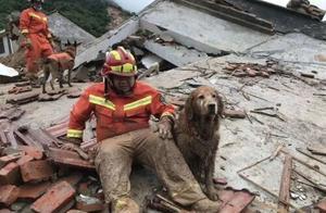 """搜救犬退休后开始""""拆家""""!网友:要把这些年少拆的家补回来"""