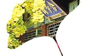 今年去这些人少的小公园品品京城银杏