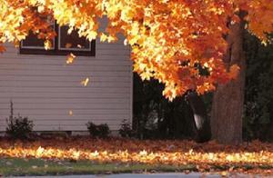 高校秋景大赏丨想在春天种下一片色彩 在秋天送给你