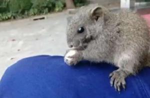 消防站香樟树上掉下一只小松鼠:与消防员一起早晨出操