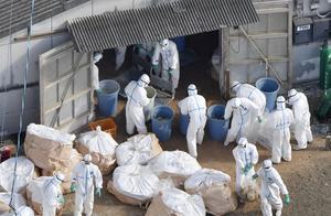 时隔约两年半,日本再次在野鸟粪便中发现高致病性禽流感病毒