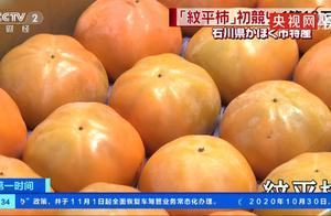 日本纹平柿子拍出天价,其中最贵的一箱10万日元!仅有6个柿子