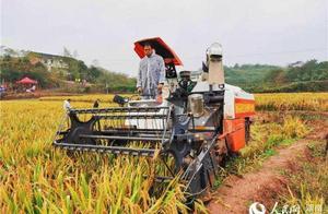 超世界纪录!超级稻亩产达3061.52斤
