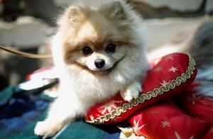 哈尔滨主城区狂犬疫苗告罄,今年已使用近七万支,多因被狗咬伤