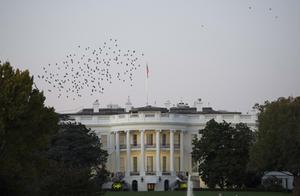 美国在纷乱中迎来总统大选 世界各国怎么看?