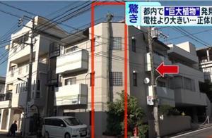 """日本街头出现""""怪物仙人掌"""":长了40年 高过3层楼"""