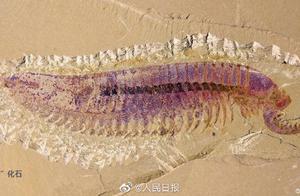 首次发现!我国科学家发现5亿年前虾形化石
