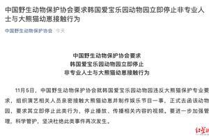 中国野生动物保护协会去函韩动物园:停止非专业人士与大熊猫幼崽接触