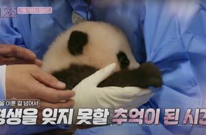 韩国艺人违规接触熊猫幼崽惹怒网友,大熊猫到底能不能摸?