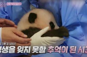 韩国艺人违规接触熊猫幼崽惹怒网友 大熊猫到底能不能摸?