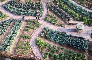 """浙江衢州:""""一米菜园""""美丽乡村盘活经济"""