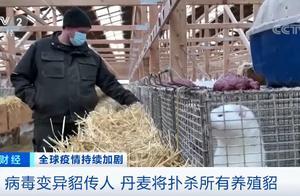 貂传人!新冠病毒变异,12人感染,丹麦宣布捕杀1700万只水貂