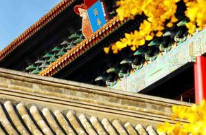 600年等一回,故宫今天开启银杏慢直播