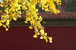 赏秋·紫禁城