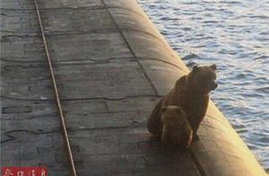 """棕熊带幼崽""""造访""""俄军战略核潜艇 均被击毙"""