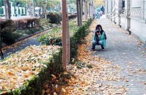 """落叶不扫景观道""""金地毯""""初现 留住秋天最后的温柔"""