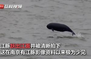 南京长江频现江豚飞跃,众多市民赶来一睹风采,网友:欢迎精灵们回家