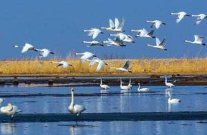 公安部:严厉打击秋冬季涉候鸟等野生动物犯罪