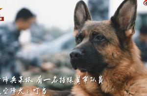 超酷画面!空降犬跟兵哥哥高空跳伞配合默契,网友:胆子不如狗系列