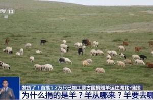 发货了!首批1.2万只已加工蒙古国捐赠羊运往湖北 过程还将拍成纪录片