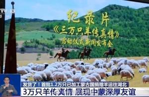 价值超3000万元,蒙古国赠羊发货了!首批1.2万只已屠宰加工运往湖北