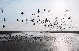 """候鸟南飞来""""歇脚"""",观鸟地图请收好"""