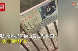 """邯郸一动物园回应""""狮子泡水池中疑似死亡"""":它生病了,因体力不支溺亡"""