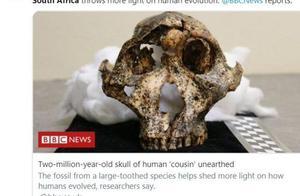 南非发现200万年前头骨化石,或来自罗百氏傍人,为人类进化提供新信息