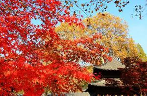 """今天,栖霞山""""实红""""了!"""