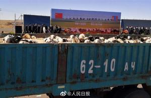 羊来啦!蒙古国首批赠羊到达武汉 武汉市商务局:将面向湖北分配
