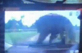 熊出没!海口一市民动物园猛兽区停留,一只大黑熊突然爬上引擎盖