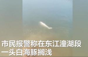 中华白海豚迷路误入东江后死亡,背后原因让人心疼