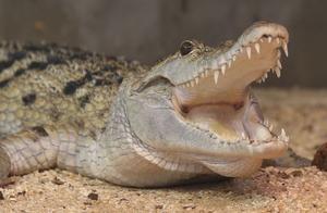 爱马仕将建最大鳄鱼养殖场,关于动物皮草,网友吵翻了