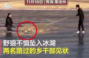 青海乡干部跳冰湖救落水野狼,网友:会不会带只鸡回来报恩?