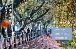 九江早安·2020年11月19日新闻早班车