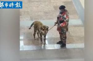 男子将金毛打扮成老虎,遛狗时看呆路人,网友:披着虎皮的狗