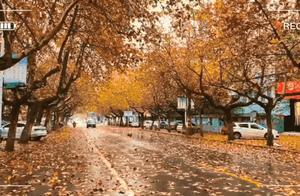 醉美落叶季!跟随壹粉的脚步捕捉冬雨带给我们的惊喜吧