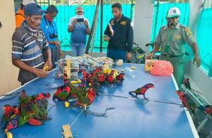 走私鹦鹉残忍塞入塑料瓶!印尼警方查获74只,一些已惨死