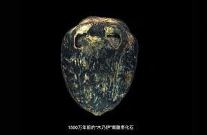 1500万年前的枣被发现,网友:有点像核桃,能不能吃?