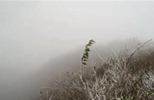 今冬第一场雪比往年来得早一点!何时升温?