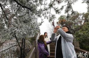 武陵源景区入冬首现雾凇美景