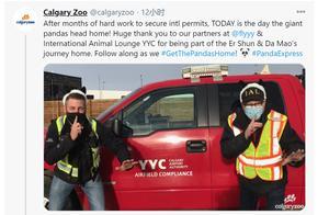 外媒:旅加大熊猫将返回中国 外国网友:难过,会想念它们
