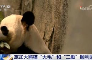 """旅加大熊猫""""大毛""""和""""二顺""""顺利回国"""