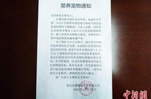 青岛禁养宠物小区物业回应:将按相关条例进行管理