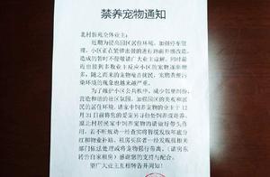 青岛一小区物业回应禁养宠物:犬只频伤人,将按相关条例管理