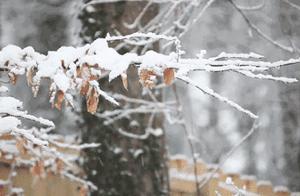 今日大雪|愿你被这世界温暖地爱着……