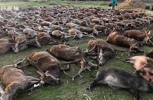 西班牙一伙猎人杀死540只鹿和野猪后将尸体摆在一起,还咧嘴大笑合影炫耀