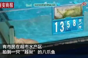 """超市八爪鱼越狱成功身价翻倍,网友:一跃成""""贵""""族"""