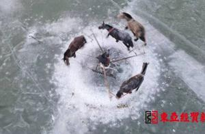 12月28日 吉林查干湖冬捕头鱼以2999999元竞拍成交